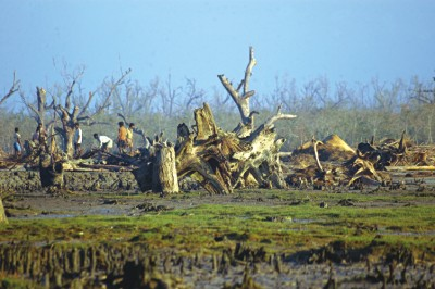 sundarban-after-sidr.jpg